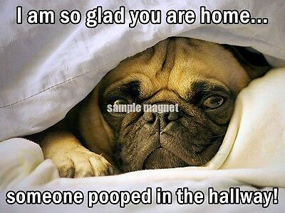 """PUG Refrigerator Magnet 4"""" x 3"""" Pooped In the Hallway"""