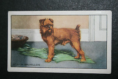 Griffon Bruxellois   Original 1930's Vintage Illustrated Card
