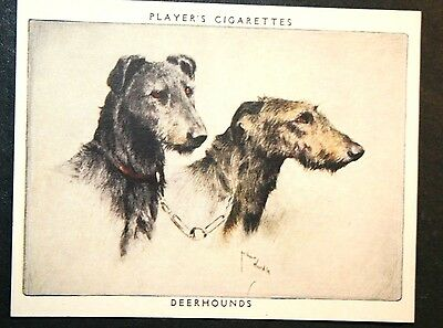 Scottish Deerhound   Superb Vintage Twin Portrait Card # VGC