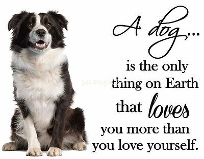 "BORDER COLLIE Love Dog Refrigerator Magnet 3.75"" x 3"""