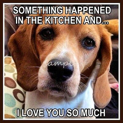 Funny BEAGLE Something Happened in the Kitchen Refrigerator Magnet 3.5 x 3.5