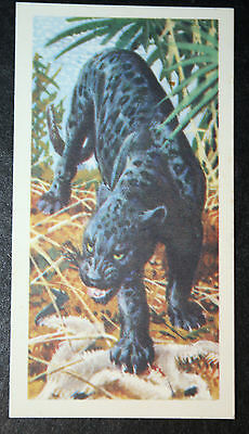 Black Panther     Original Vintage Card  # VGC