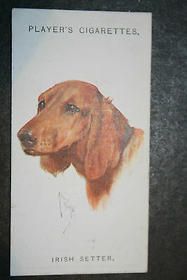 Irish Setter   1920's Vintage Dog Portrait Card # VGC