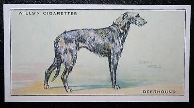 Scottish Deerhound   Superb Original 1937 Vintage Card # VGC
