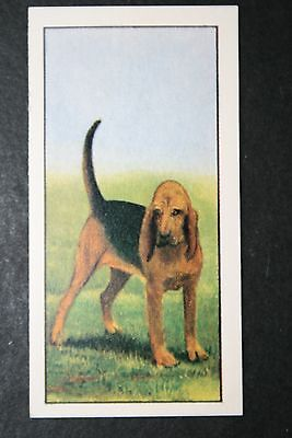 Bloodhound   Early 1960's Portrait Card