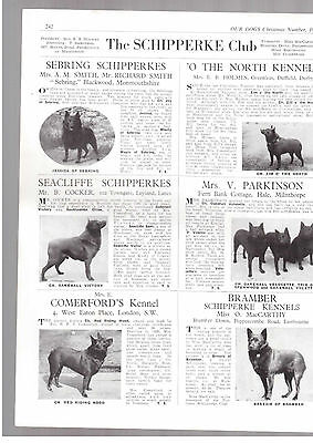 Schipperke breed kennel clippings terrier breed x 50 dog crufts