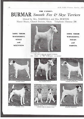 smooth fox Terrier breed kennel clippings terrier breed x 50 dog crufts lot 3