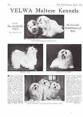 maltese breed kennel clippings pedigree crufts x 100 lot 2 dog showing