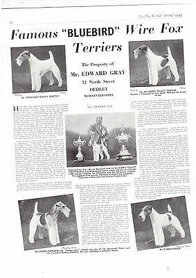 wire fox Terrier breed kennel clippings terrier breed x 50 dog crufts lot 2