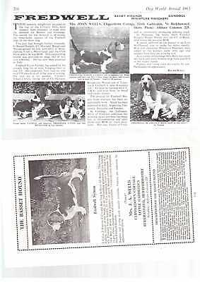 Basset Hound breed kennel clippings pedigree crufts x 150 lot 1 dog showing