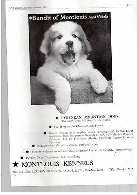 Pyrenean mountain dog  breed kennel clippings pedigree crufts x 100 lot 1