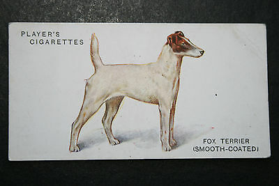 Fox Terrier  Smooth-Coated   Early 1930's Original Vintage Illustrated Card