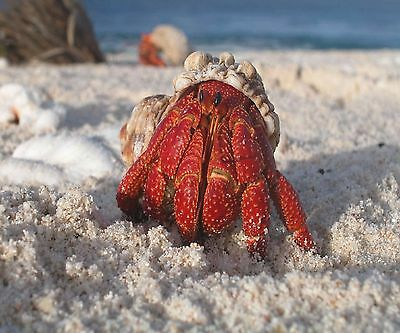 HERMIT CRAB SEASHELL ON THE BEACH  OCEAN COMPUTER MOUSE PAD  9x7
