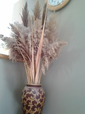 "NATURAL air dried REED GRASS BUNCH OF 20 STEMS, 18"" - 30"" Stems"