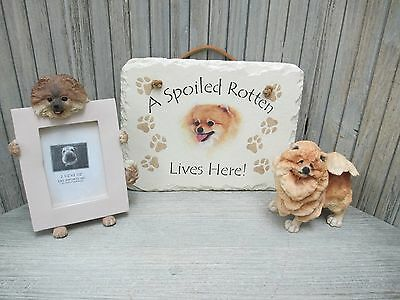 """Pomeranian - """"Spoiled Rotten"""" Slate Plaque, Frame, A Breed Apart Statue"""