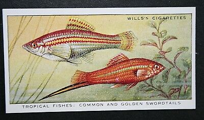 Swordtails   Tropical Fish  Superb Vintage Card  VGC