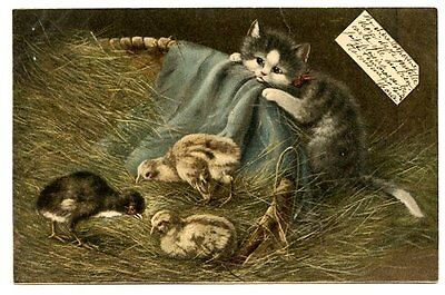 vintage cat postcard Muller curious grey tabby cat watches chicks in barn 1904