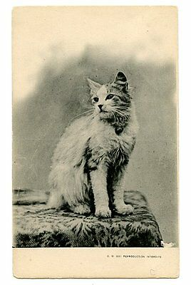 vintage cat postcard beautiful longhaired cat w bell poses on table