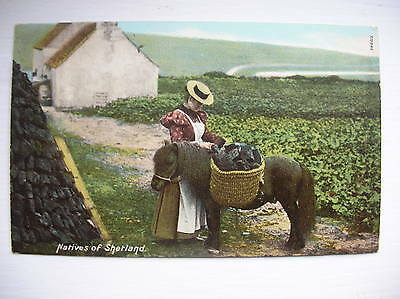 Natives of Shetland (Pony) - Lerwick, Scalloway etc. (Hartmann)