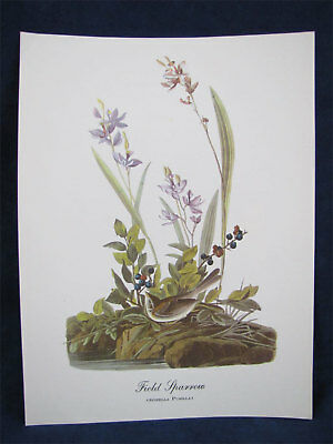 Vintage Audubon Best Loved Bird Prints- Field Sparrow
