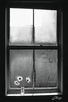 "Window of Hope photography poster 24x36"" Rain with daisys"