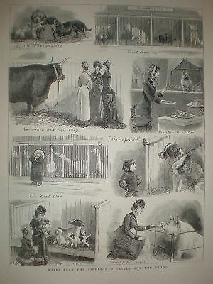 Notes from the Birmingham Cattle and Dog Shows 1881