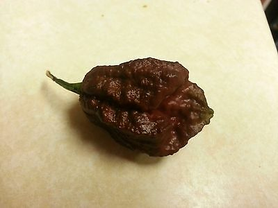 Chocolate Trinidad Scorpion pepper *100+ seeds* Free U.S.A. Shipping*
