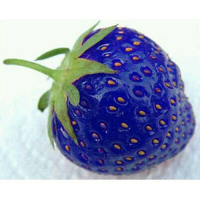 100pcs Blue Strawberry Seeds Excellent High in Vitamin Fruit Plants