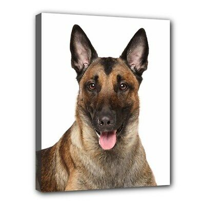 "BELGIAN MALINOIS Dog Art Portrait 11""x14"" Wrapped CANVAS PRINT Wall Hang Deco"