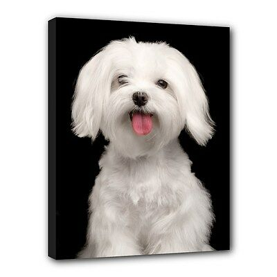 "MALTESE Dog Puppy Art Portrait 11""x14"" Wrapped CANVAS PRINT Wall Hang Home Deco"
