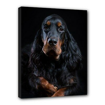 "GORDON SETTER Dog Art Portrait 11""x14"" Wrapped CANVAS PRINT Wall Hang Home Decor"