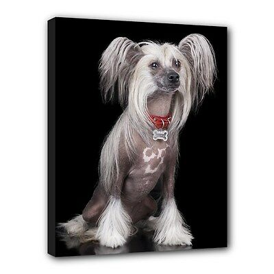 """New CHINESE CRESTED Dog Art Portrait 11""""x14"""" Wrapped CANVAS PRINT Wall Hang Deco"""
