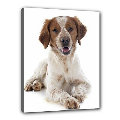 "BRITTANY SPANIEL Dog Art Portrait 11""x14"" Wrapped CANVAS PRINT Wall Hang Deco"