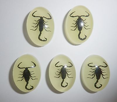 Insect Cabochon Black Scorpion Oval 18x25 mm glow in the dark 5 pieces Lot