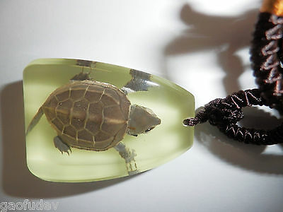 Animal Large Necklace Farmed Turtle Specimen GLOW in the dark