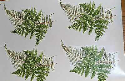 CERAMIC DECALS  4 FERNS 646213 18 cm X 13 cm RIGHT PRICE