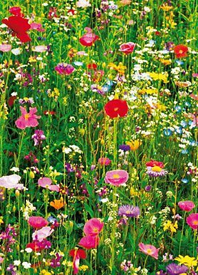 New Meadow of Flowers 4 Sheet Wall Mural Wall Mural