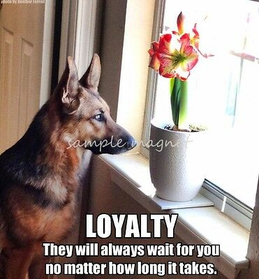 "GERMAN SHEPHERD Loyalty Refrigerator Magnet 3.5"" x 3.25"""