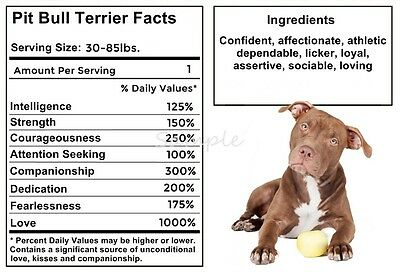 PIT BULL Facts LARGE FRIDGE MAGNET #1
