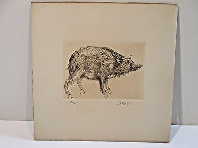 THOMAS CORNELL ETCHING Print - PIG - pencil hand signed & # 35/120