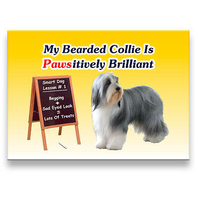 BEARDED COLLIE Pawsitively Brilliant FRIDGE MAGNET No 1