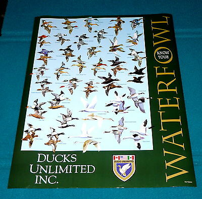 "2002 DUCKS UNLIMITED ""Know Your Waterfowl"" POSTER @ Duck ID CHART Aquatic BIRDS"