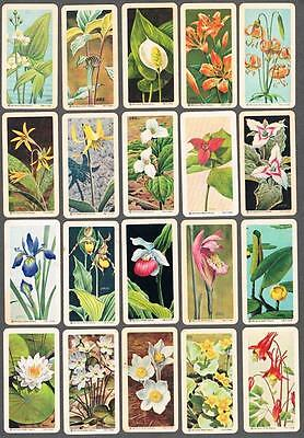 1961 Brooke Bond Wild Flowers of North America Trading Cards Complete Set of 48