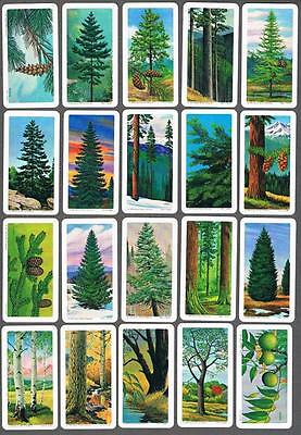 1968 Brooke Bond Trees of North America Trading Cards Complete Set of 48