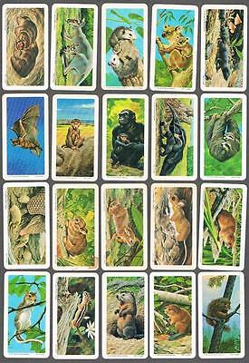 1972 Brooke Bond Animals and Their Young Trading Cards Complete Set of 48