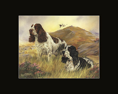 New Springer Spaniel Pair Matted Print Robert May