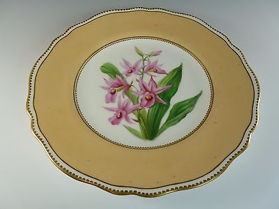 """SPODE COALPORT Porcelain - Orchid """"the Rosy Limatode"""" - Cabinet Plate"""
