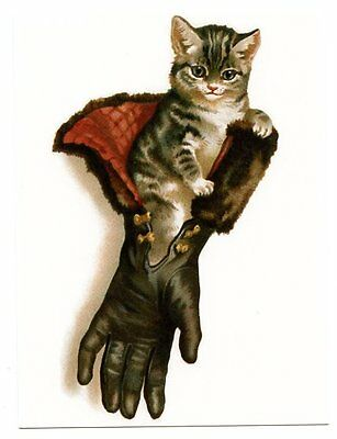 modern cat postcard Maguire gorgeous tabby cat kitten in ladies furlined glove