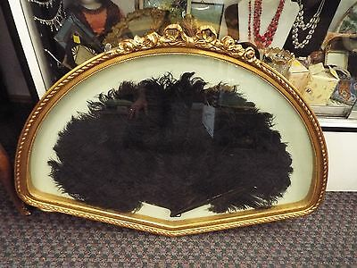 Large Victorian Ostrich Feather & Faux Tortoise Fan In Shadow Box Nr