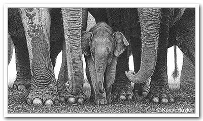 Baby elephant print picture wildlife animal wall sketch fine art pencil drawing